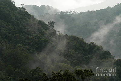 Poster featuring the photograph Misty Cloud Forest Matagalpa Nicaragua by John  Mitchell