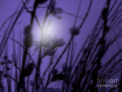 Poster featuring the photograph Misty Moonlight Marsh by Roxy Riou