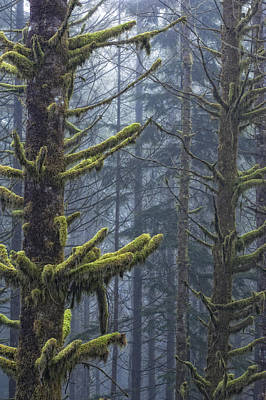 Misty Mystical Moss Forest Poster