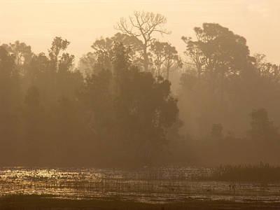 Misty Wetlands Poster