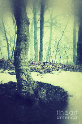 Misty Winter Woods Poster