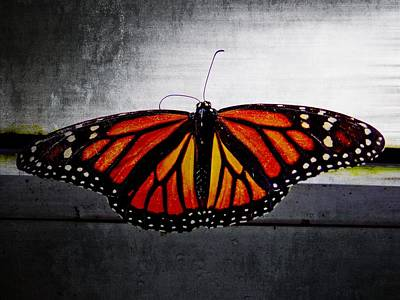 Poster featuring the photograph Monarch by Julia Wilcox