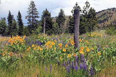 Poster featuring the photograph Montana Wildflowers by Athena Mckinzie