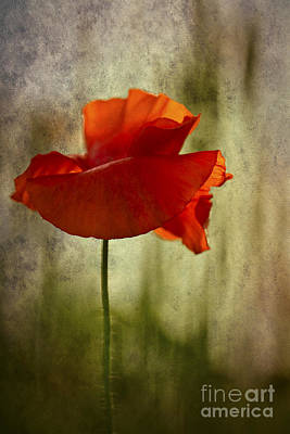 Poster featuring the photograph Moody Poppy. by Clare Bambers - Bambers Images