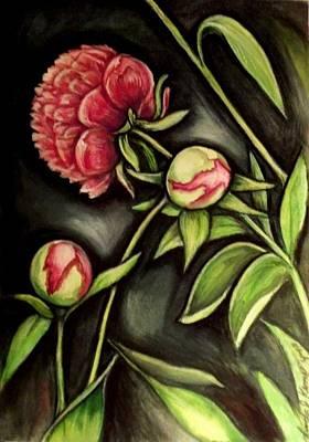 Moonlit Peonies Poster by Linda Nielsen