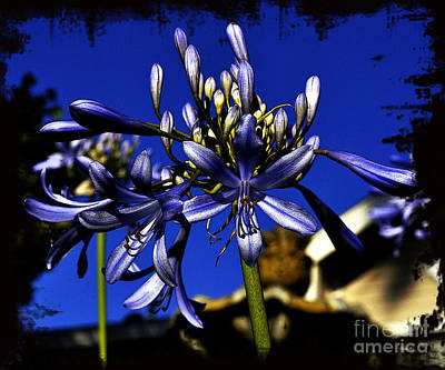 Poster featuring the photograph Morning Blooms by Clayton Bruster