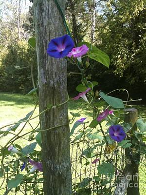 Poster featuring the photograph Morning Glory by Janice Spivey