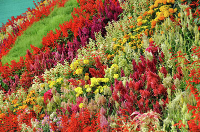 Mountain Of Flowers Poster by Fameleaf Photos