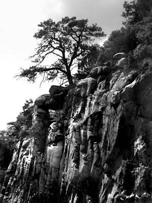 Mountain Tree Poster