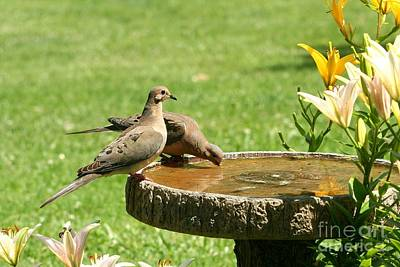 Poster featuring the photograph Mourning Doves by Jack R Brock