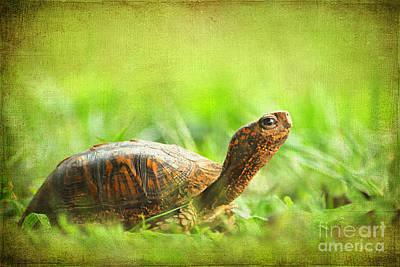 Mr Turtle Poster