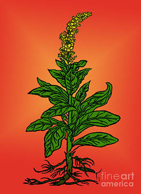 Mullein Poster by Science Source