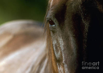 Poster featuring the photograph My Neigh-bor's Horse by Doug Herr