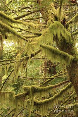 Mysterious Moss Poster by Carol Groenen