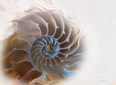 Natural Spiral Poster