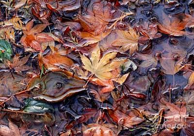 Nature's Confetti 1 Poster