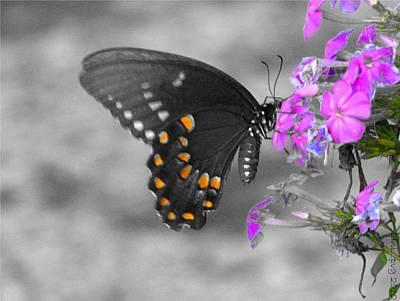 Nectar Collector Poster