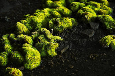Neon Moss Poster by Joe Gee