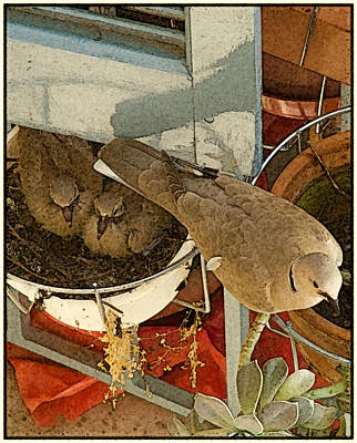 Thessaloniki, Greece - Nest Poster