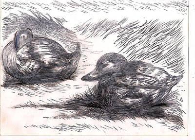 Nesting Mallards Poster by Al Goldfarb