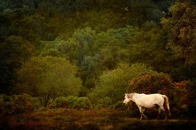 Poster featuring the photograph New Forest Walk by Dorota Kudyba