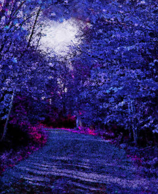 New York Autumn Night Forest Poster by Steve Ohlsen