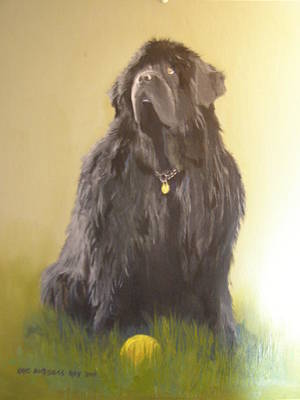 Newfoundland With Ball Poster