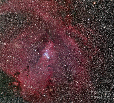 Ngc 2264, The Cone And Christmas Tree Poster by Phillip Jones