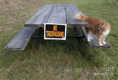 No Trespassing Poster by Jeannette Hunt