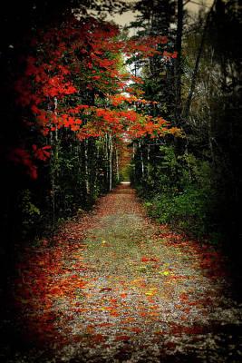 Northern Michigan Autumn 6 Poster