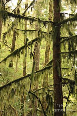 Northwest Mossy Tree Poster by Carol Groenen