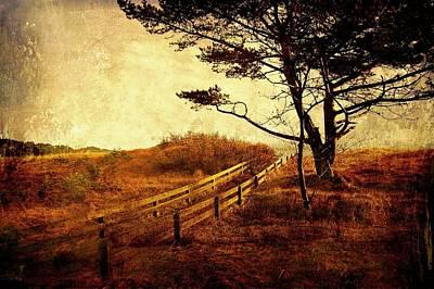 Norwegian Pine Poster