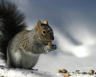 Nutty About Winter Poster