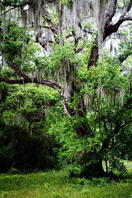 Poster featuring the photograph Oak And Moss by Jason Smith