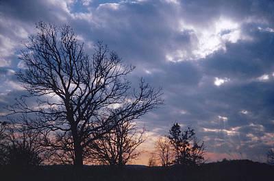 Oak In Sunset Poster