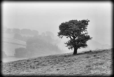 Poster featuring the photograph Oak Tree In The Mist. by Clare Bambers