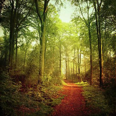 October Forest Poster by Dirk Wüstenhagen Imagery