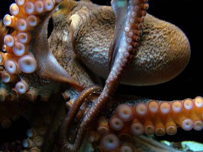 Octopus 1  Poster