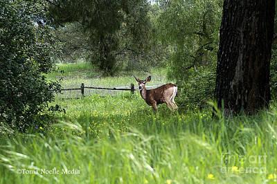 Oh Deer Poster by Tonia Noelle