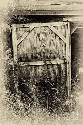 Old Shed Door Poster by Eva Thomas