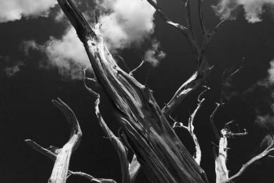 Poster featuring the photograph Old Tree by David Gleeson