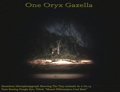 One Oryx Gazella  Poster by Phillip H George