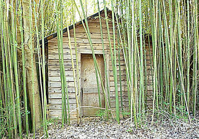 One Room House With Bamboo Poster by Renee Trenholm