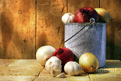 Onion Harvest Poster by Sandra Cunningham