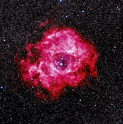 Optical Image Of The Rosette Nebula Ngc 2237-2239 Poster by Celestial Image Co.