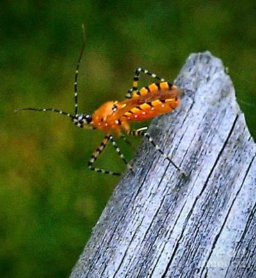 Orange Bug 2 Poster