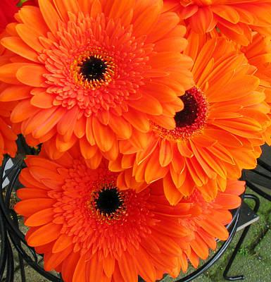 Orange Burst Poster by Elvira Butler