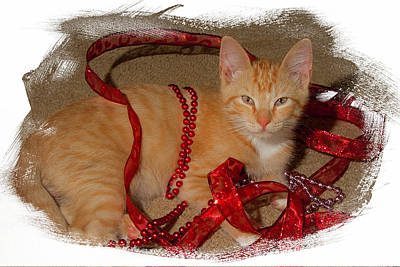 Orange Kitten With Red Ribbon Poster