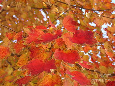Orange Leaves 4 Poster by Rod Ismay