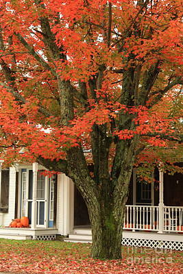 Orange Leaves And Pumpkins Poster by Deborah Benoit
